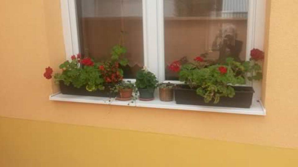 cvijeće matica umirovljenika osijek-0001